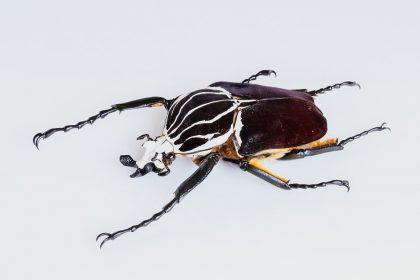 Museo – Los insectos, un pequeño gran mundo